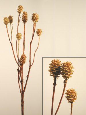 Leucadendron (Zweige)